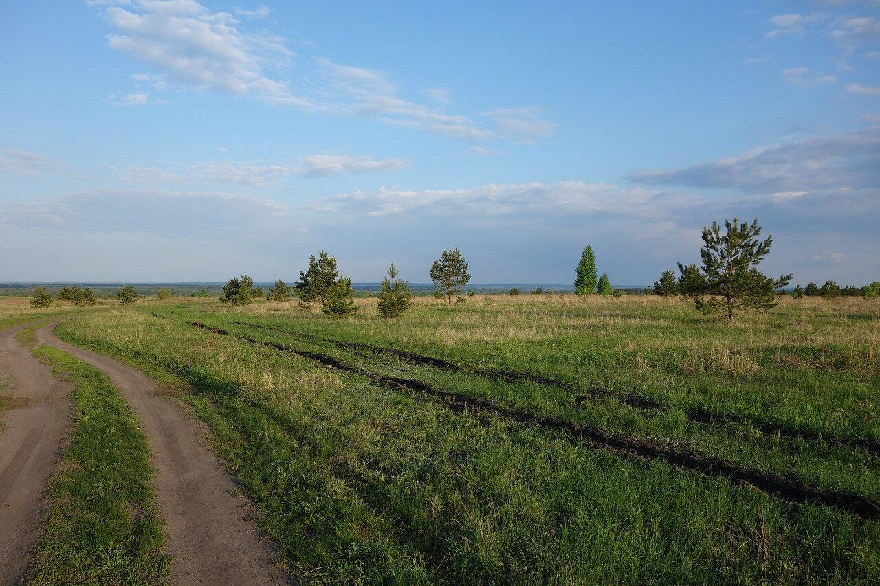 сосенки на высоком берегу р. Хопер