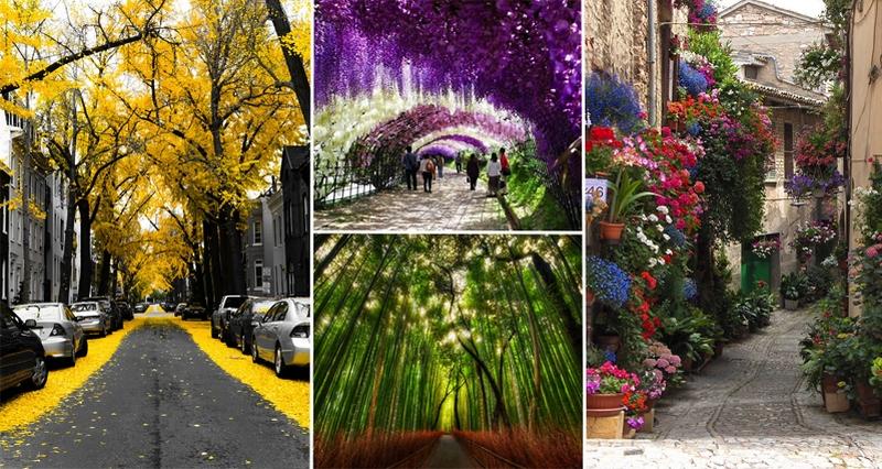 Великолепные аллеи в разных городах мира