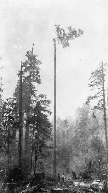 logging-23.jpg