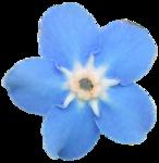 RR_SpringFling_Element (95).png