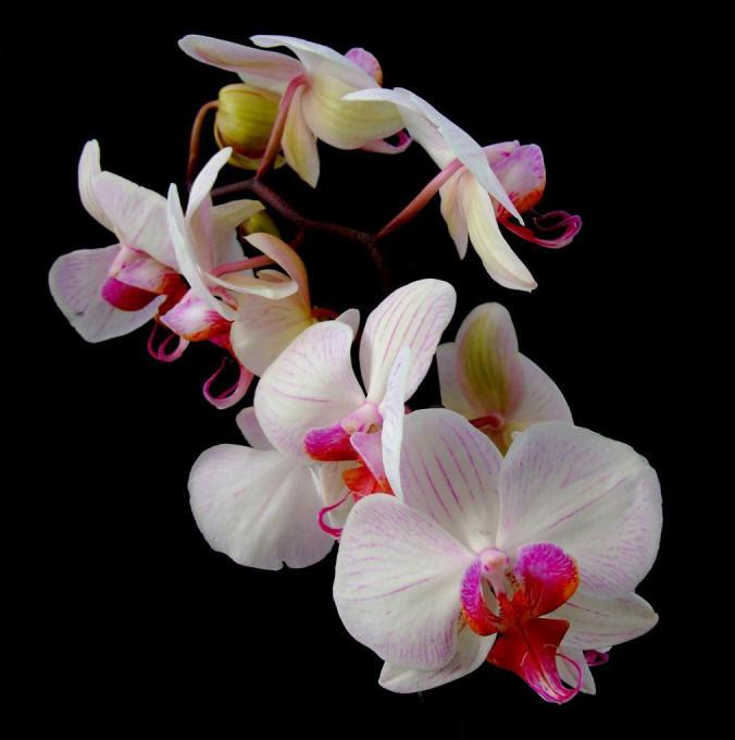 красиві орхідеї