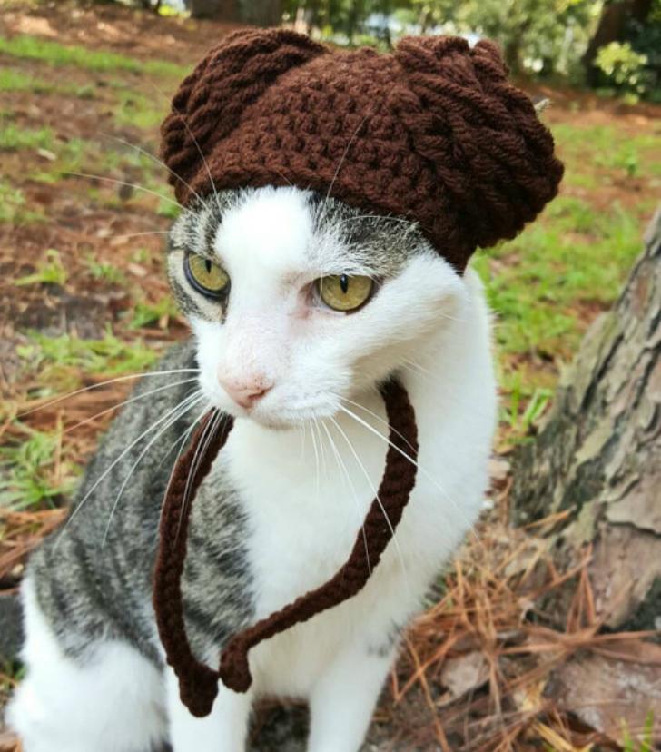 Вашему котику нужна такая шапочка!