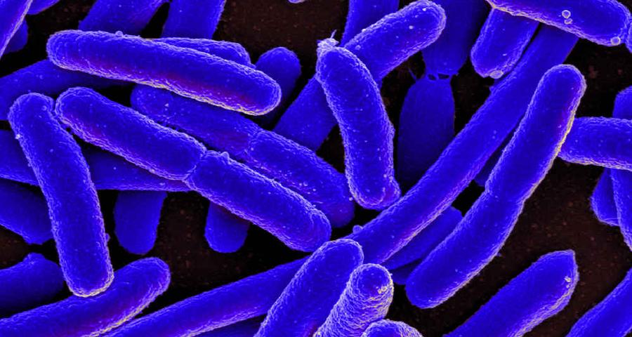 Конечно же! Простейшие организмы, образующие общий разум. Бактерии — чуть ли не самый ожидаемый учен