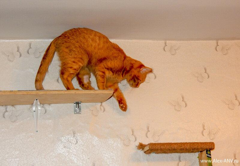 Впрочем у котов стерелизация происходит гораздо проще, нежели у кошек. И наркоз им дают минимальный. Поэтому уже через десяток минут кот залез на свою любимую полочку.
