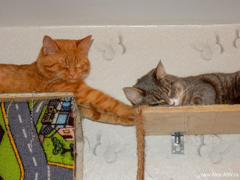 Вот так они тоже спать умеют.