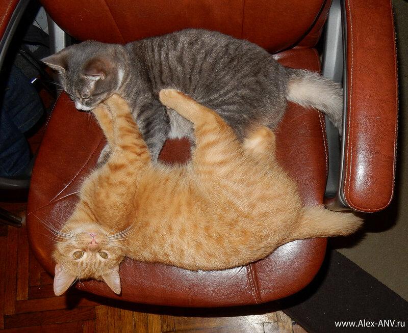 Это не момент драки - это они так спать улеглись, в обнимку.