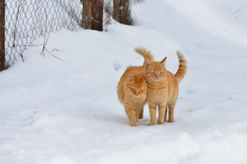 С Днём кошек!