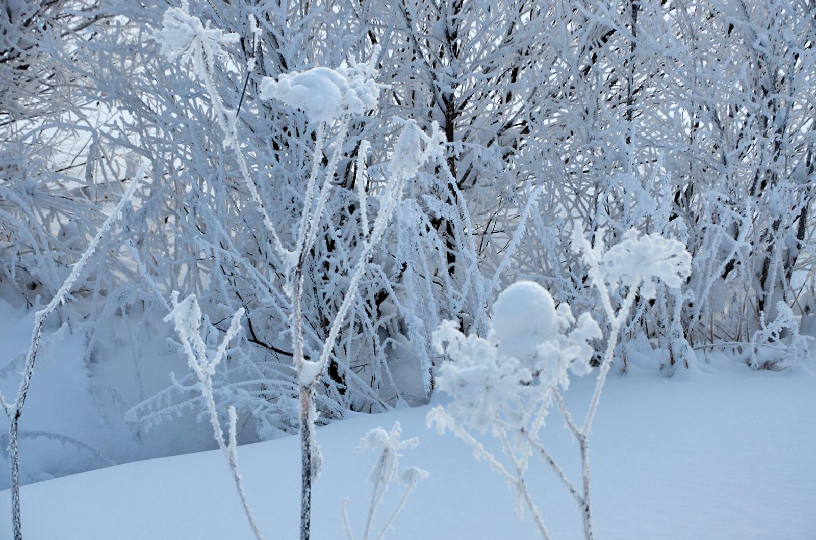 Морозный день. В погоне за радугой