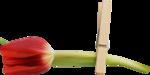 Spring_Florals_WendyP_el (28).png
