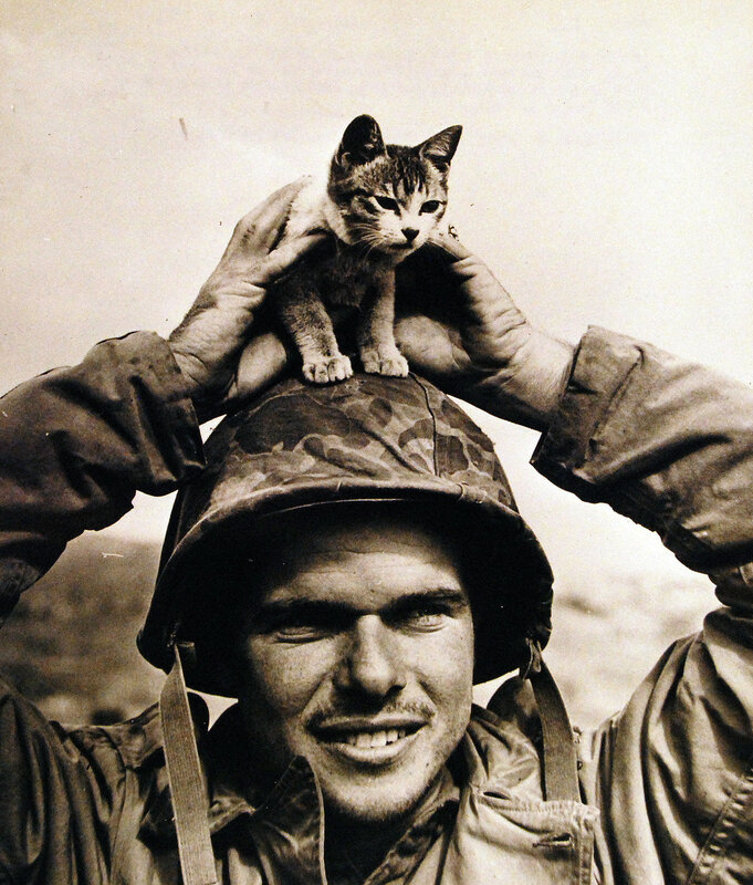 """Battle for Iwo Jima. Corporal Edward Burckhardt with the kitten he said """"captured him"""" at the base of Mount Suribachi Yama on the battle field. Fifth Marine Division, March 2, 1945."""