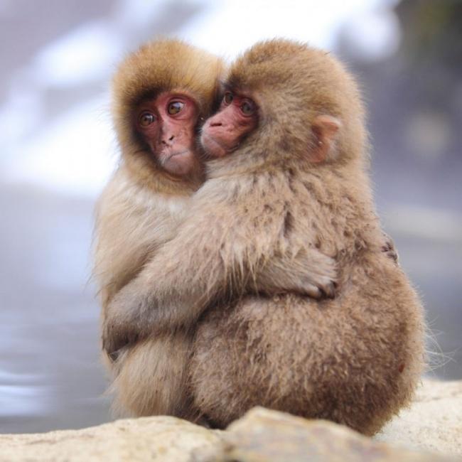 15пушистых братьев исестричек, которые очень любят друг друга
