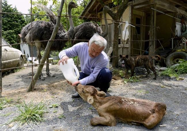 Наото Мацумура— единственный человек, который непобоялся жить взапретной зоне около Фукусимы. Он