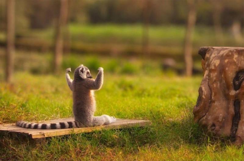 15 животных, которые знают, как привести себя в форму к весне (16 фото)