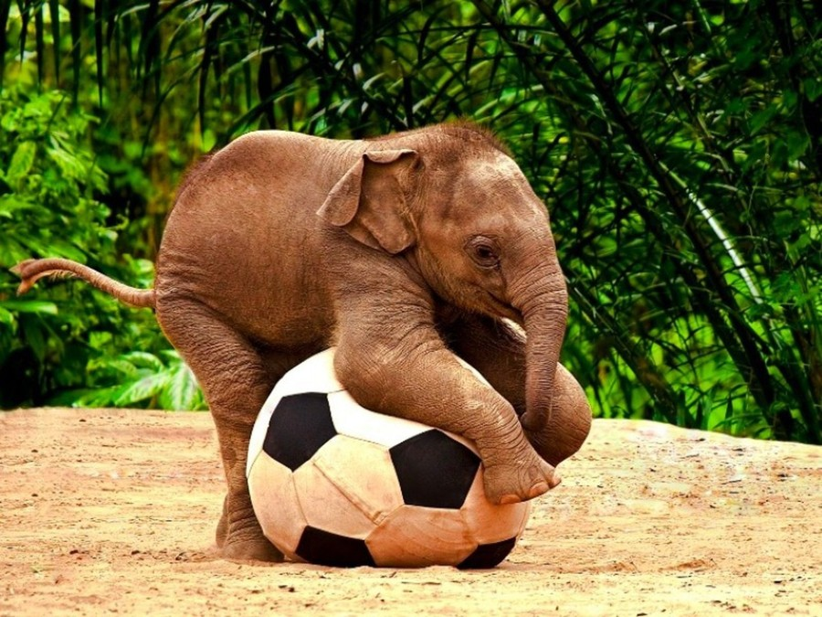 Интересно, какого размера ворота в этом футболе?