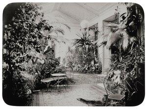 Зимний сад в доме И.Ф. Паскевича на Английской набережной