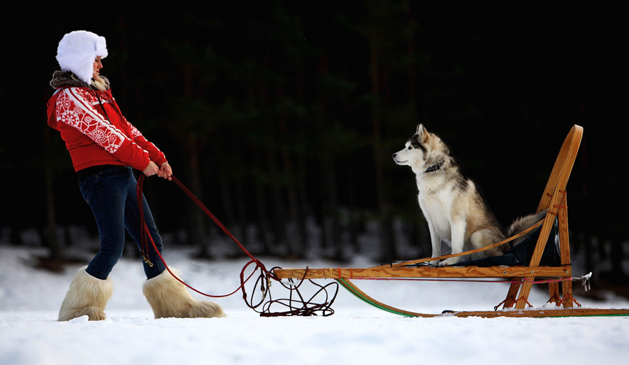 Lisa Curtin prepares for the 27th annual Aviemore Husky Sled Dog Rally beside Loch Morlich on Januar