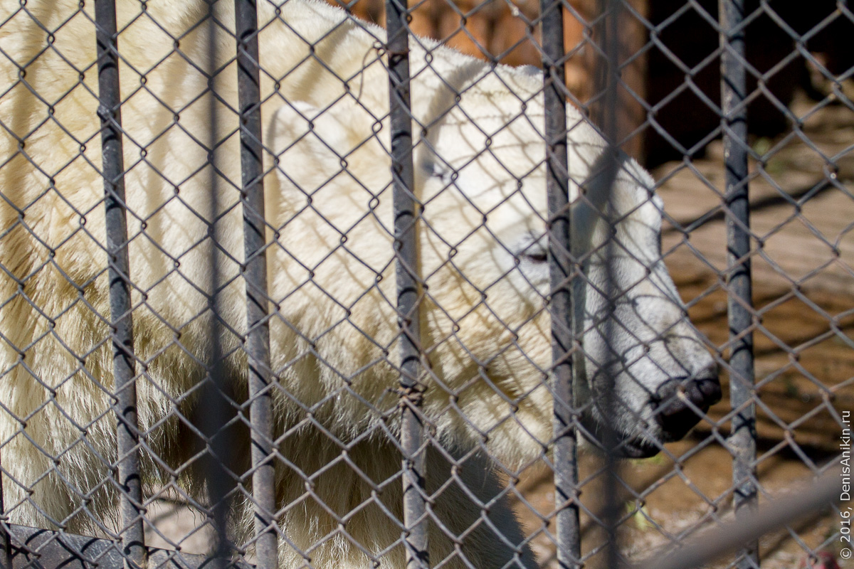 Пензенский зоопарк. Животные 8