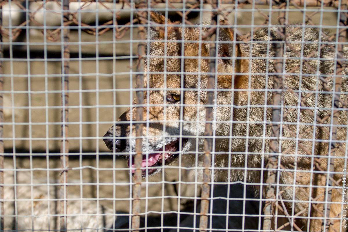 Пензенский зоопарк. Животные 10