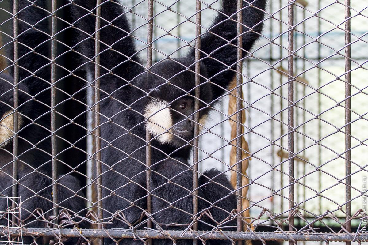Пензенский зоопарк. Животные 17
