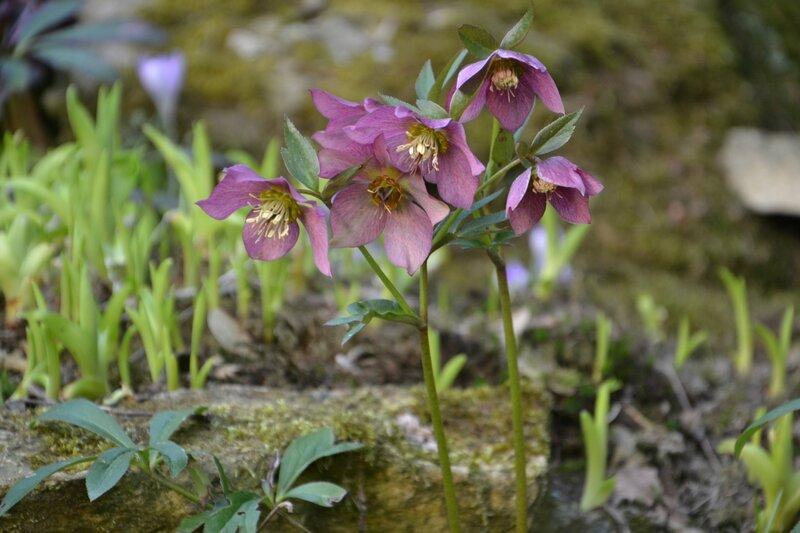Весна, рождает жизни новой обновленье