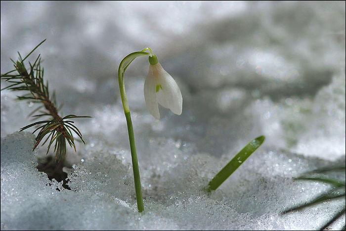 я-весна-класс.jpg