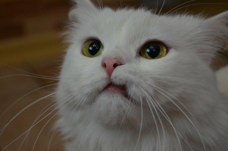 Кошки такие смешные...