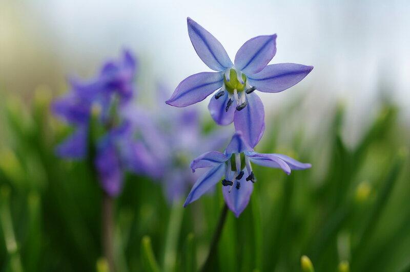 Робкая нежность весны