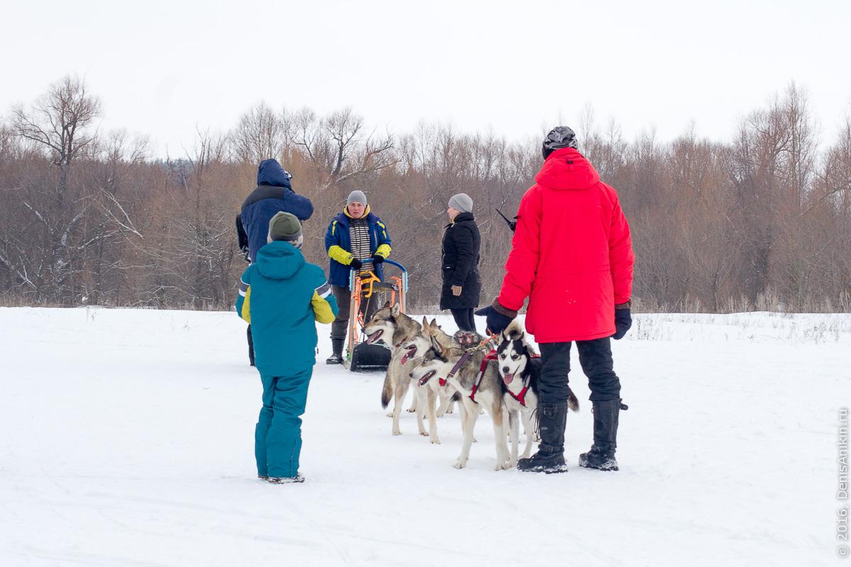 Питомник сибирских хаски DogWinter 19