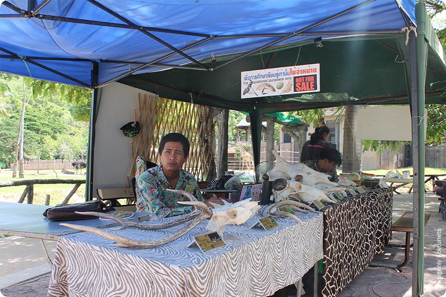 Черепа животных для потрогать, зоопарк Кхао-Кхео, Тайланд