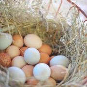 К чему снится много яиц