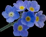 RR_SpringFling_Element (91).png