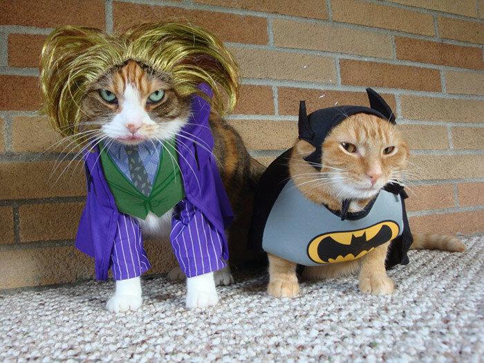 Самые смешные кошки. Лучшая подборка видео, которая только есть в интернете