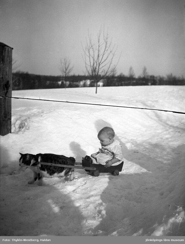 Маленький ребенок сидит в коляске, запряженной кошкой, на заснеженной дорожке.1920 - 1940, Thylen-Westberg, Haldan