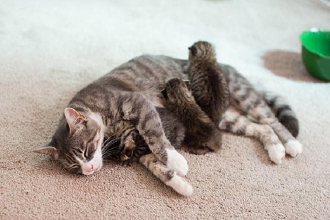 Пока мама спит, можно ипохулиганить.