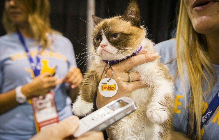Популярная «сердитая кошка» заработала своим хозяевам почти 100 млн долларов