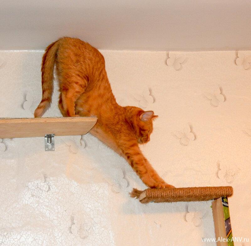 А услышав шуршание корма на кухне решительно полез вниз, поближе к миске.