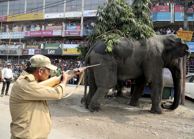 A forest official shoots a tranquilizer dart at a wild elephant in a street in Siliguri, India, Febr