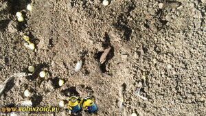 выведение муравьёв