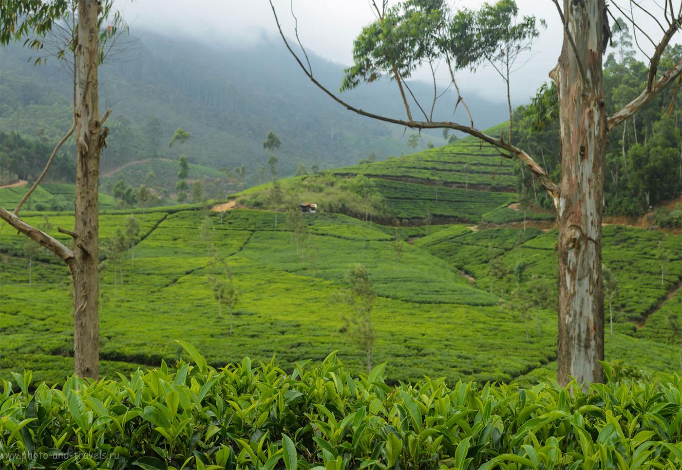 Фото 18. Чайная плантация в горах Шри-Ланки, затерявшаяся где-то в районе деревни Agrapatana. Отзывы туристов из России о самостоятельной поездке на Пик Адама в мае. Как добраться читайте в первой части отчета.