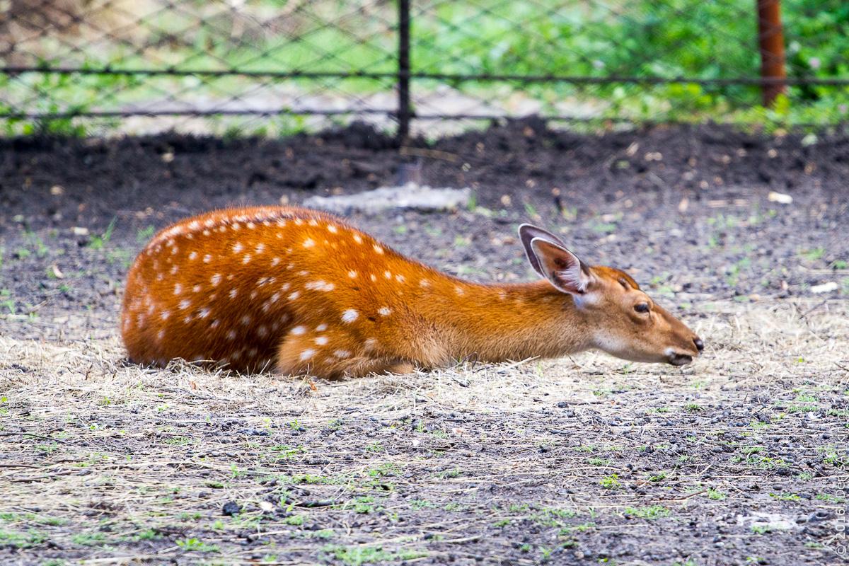 Пензенский зоопарк. Животные 2