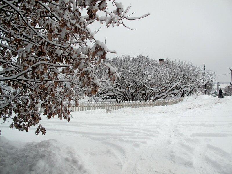 Снежные дни зимы в Острове