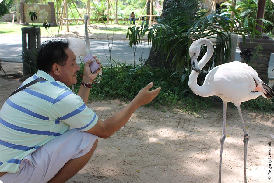 Тайский гид и розовый фламинго. Khao-Kheow Open Zoo.