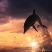 Дельфин в закате