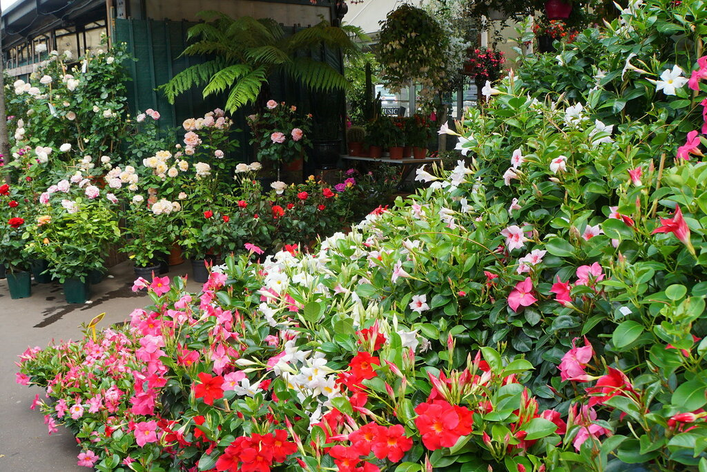 На цветочном рынке