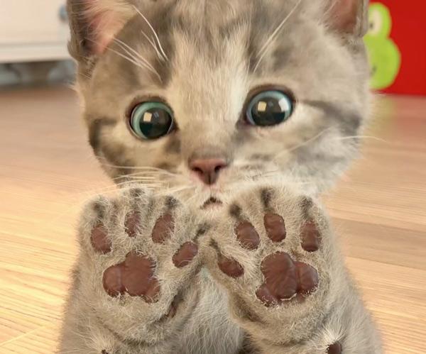 Дать объявление о продаже кота.котенка бесплатное объявление дать краснодар
