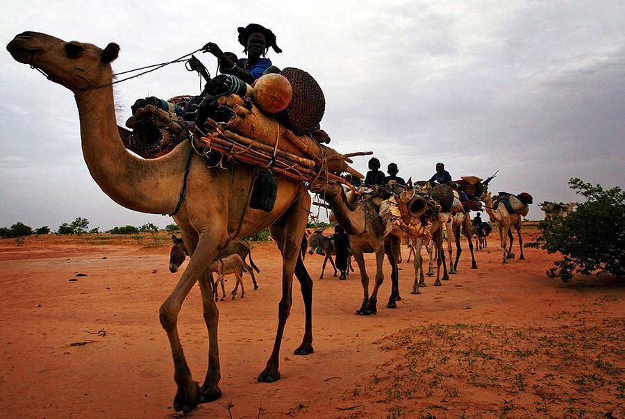 41. Пересеките пустыню Сахара с торговцами соли — Северная Африка Сахара занимает площадь в более че