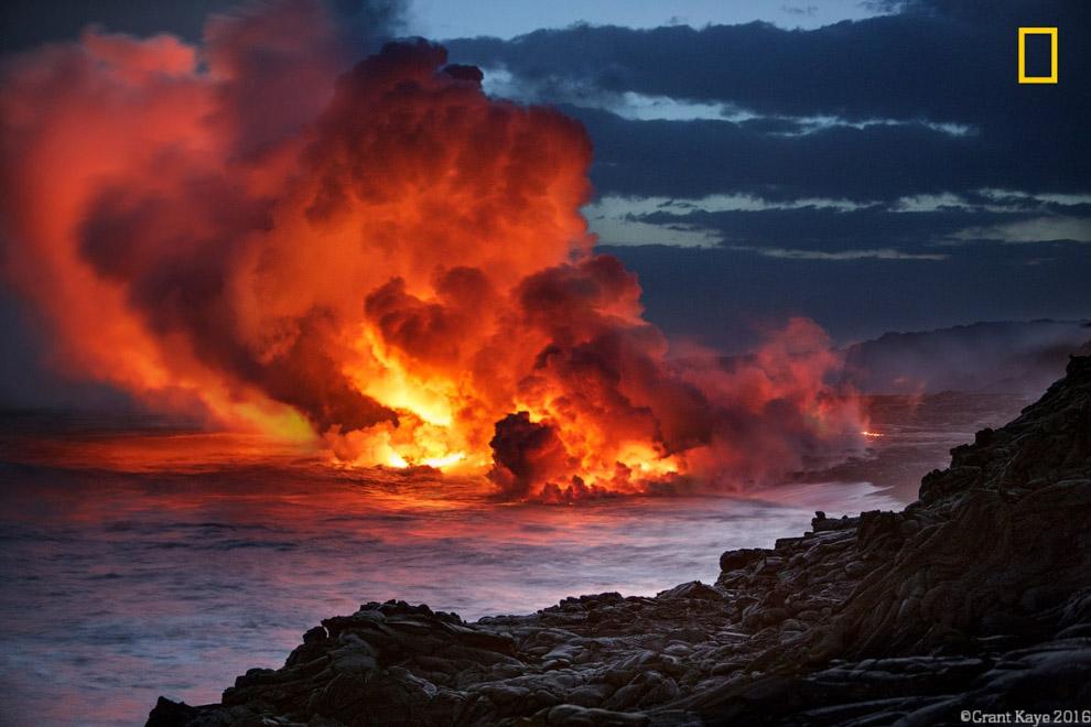 12. Атлантический ту?пик у берегов Мэн. (Фото ):