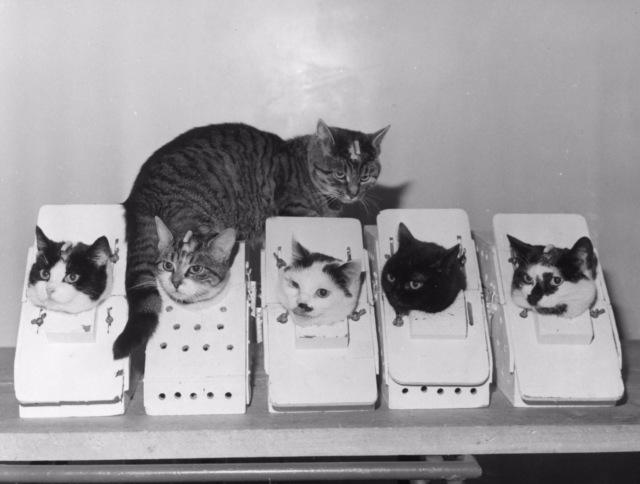 Дай на лапку: пользователи сети собирают деньги на памятник кошке-космонавту (5 фото)