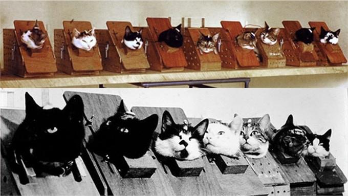 Фелисетт выбрали из целой группы кошек после ряда тренировок и тестов, включая вращение в центрифуге
