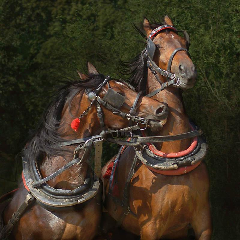 7. Лошади с впалыми профилями казались яростными, а высоко посаженные хвосты часто привлекали вниман